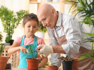Economia e saúde! Aprenda a cultivar suas hortaliças em casa